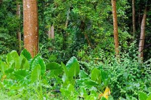 Green Jungle Vegetation Tropical Forest